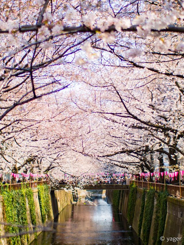 2017-04-04_桜_EM5_目黒川-00006