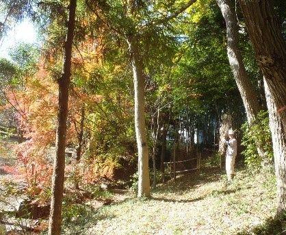 竹垣と代表と紅葉