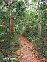 ジャングルへ突入!