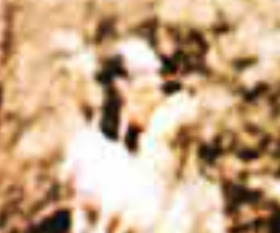 1548b5b4.jpg