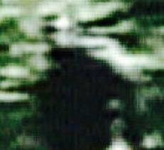 208f7b4a.jpg