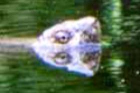 2f468f38.jpg