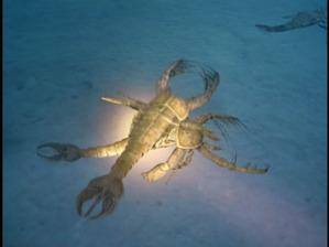 SeaScorpion-3