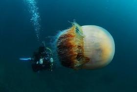 meduse6