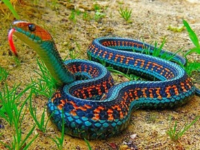 Animals-and-Pets-Beautiful-Snake-2707