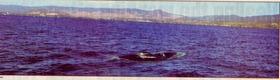 f6b66cfa.jpg