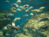世界最大級の淡水魚水族館、アクア・トト・ぎふ