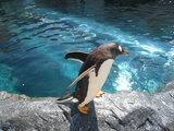ペンギン(イン旭山動物園)