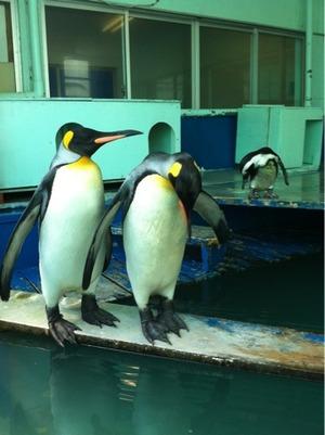 二見シーパラダイスのペンギン
