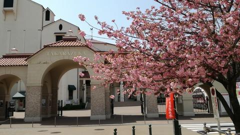 大劇場と八重桜