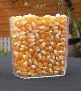 ポップコーン 豆