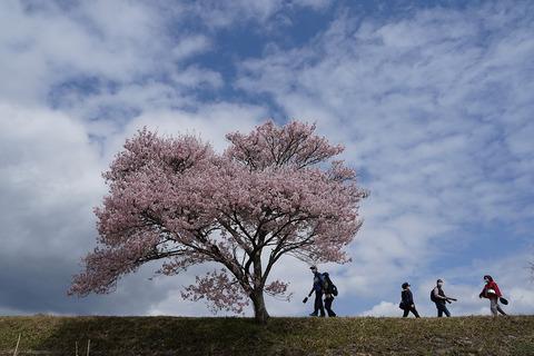 名倉桜見物2