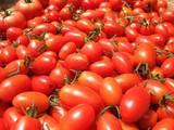 真っ赤なトマト2