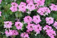 小さなピンクの花