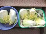 白菜浅漬け準備