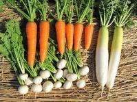 収穫根菜類