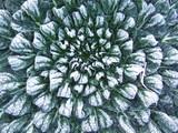 ターサイに霜