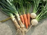 リーキ野菜収穫