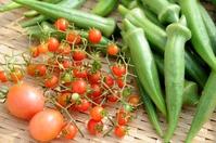 マイクロトマト収穫