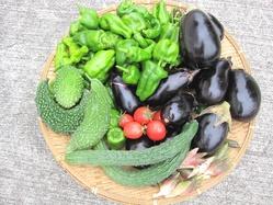 まだ夏野菜