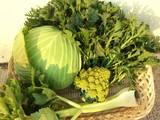 キャベツとセロリの収穫