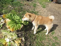 白菜とモモ