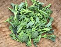 ブロッコリー収穫