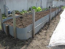 山芋畝作り