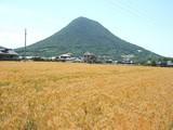 麦と飯野山