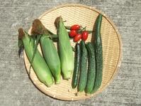 トウモロコシと四葉