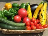 夏野菜の収穫2