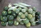 カボチャ収穫