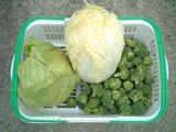 キャベツ・白菜の収穫