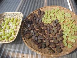 干し葡萄作り