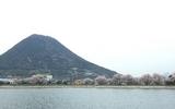 桜と飯野山