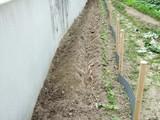 山芋の植え付け2