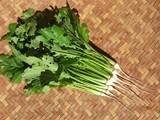 蕪の間引き菜