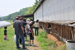 真鍋農園牛舎