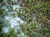 雪とほうれん草