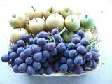 梨と葡萄の収獲
