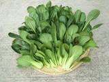 小松菜最終収穫