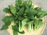 ほーれん草と青梗菜