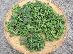 ブロッコリー各種収穫
