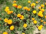 黄色の大輪花