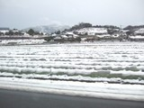 レタスの畑