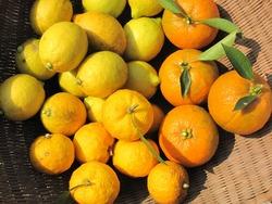 レモン柚子