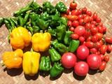 赤黄緑収穫