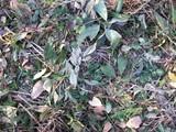 畝上に落ち葉