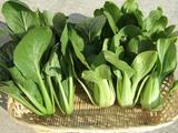 小松菜とチンゲンサイ