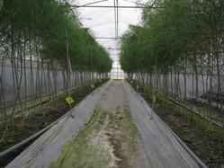 正月から収穫の畝